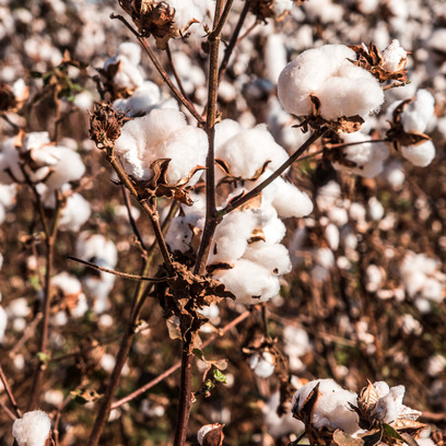 Cotton and cotton mix